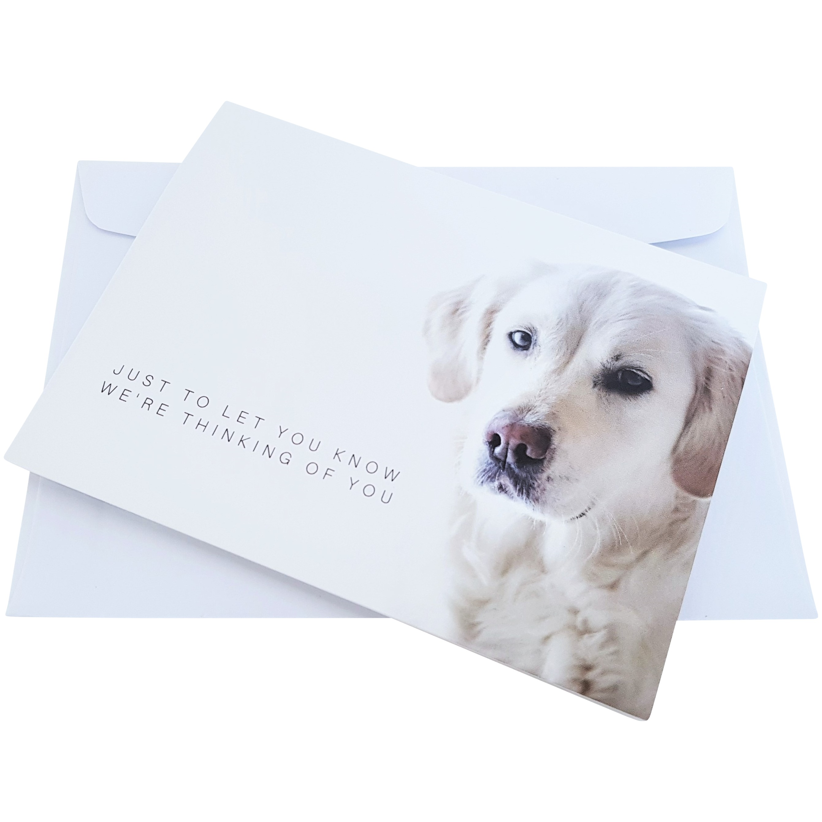 dog sympathy card pet loss